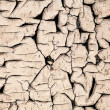 Stock Photo: White cracked grunge background