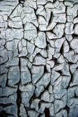 Cracked grunge structure — Stock Photo