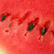 Ripe water melon — Stock Photo #1718462