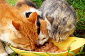 三只猫 — 图库照片