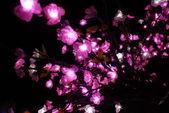 Cherry blossom — Stock Photo