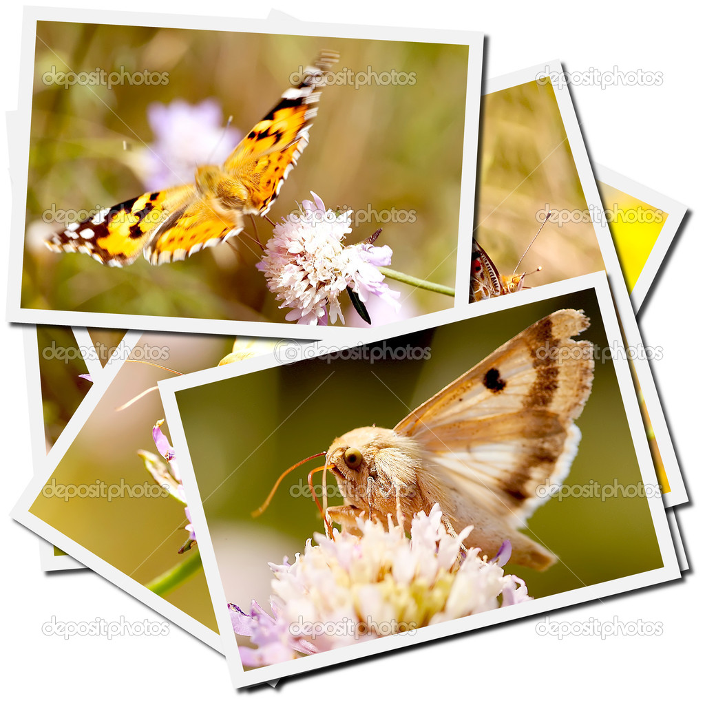Collection of pictures of butterflies on a flower — Stock Photo #1485715