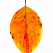 Leaf on a gleam — Stock Photo