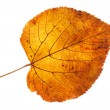 Stock Photo: Leaf on gleam