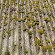 Moss growing on old roof - 