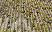 Moss growing on old roof — Stock Photo