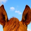 Stock Photo: Horse's ears