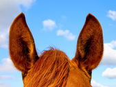 Horse's ears — Stock Photo