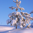 Snow-covered tree in winter forest — Stock Photo #1699615