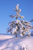 Snow-covered tree in winter forest — Stock Photo