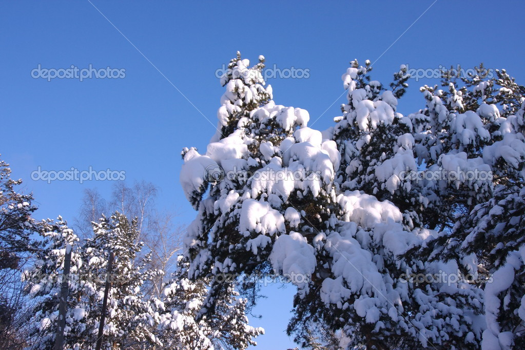 Snow-covered branches of trees in winter forest — Stock Photo #1701206