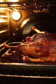 Goose in oven — Stock Photo