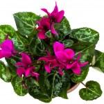 Flower — Stock Photo #1547704