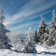 Snow covered tree in mountains - Stock Photo