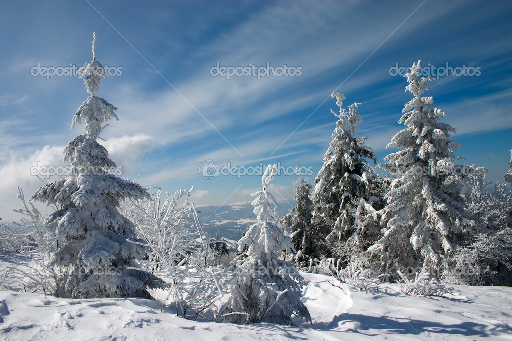 Snow covered fir trees in mountains under blue sky with clouds  Stock Photo #1496119