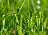 Morning dew drops — Stock Photo