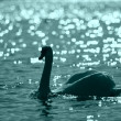 Swan in a night lake - Stock Photo