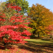 foresta d'autunno multicolore — Foto Stock