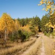 Stock Photo: Autumn forest and road