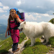 Backpacker girl with samoyed dog — Stock Photo