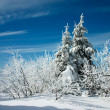 Snow covered trees at winter — Foto Stock
