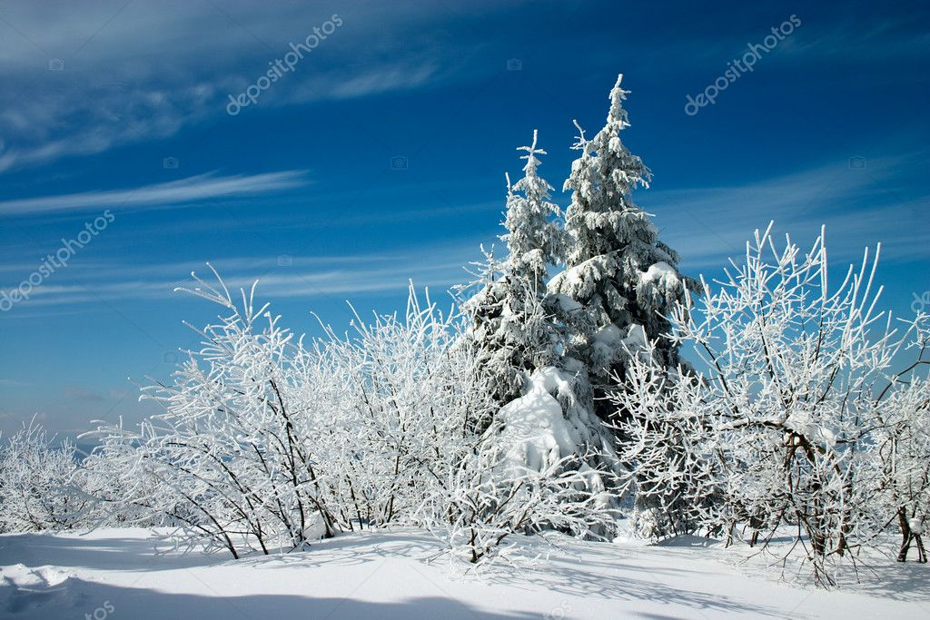 Snow covered trees and blue sky with clouds  Stock Photo #1519338
