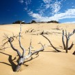 Dead tree in sand desert — Stock Photo #1526145