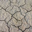 Parched crannied earth - Stock Photo