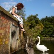 Girl and a family of swans — Stock Photo
