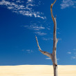 Old dry dead tree in a desert — Stock Photo #1554584