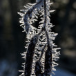A pod in hoar-frost - Stock Photo