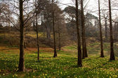 Spring forest with daffodil flowers — Stock Photo