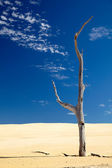 Old dry dead tree in a desert — Stockfoto