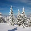 Foto Stock: Winter forest in Carpathian mountains