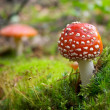 Flyagaric mushroom in green moss - Stock Photo