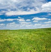 Yeşil çim ve mavi gökyüzü — Stok fotoğraf