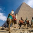 Stock Photo: Bedouin on camel near of egypt pyramid