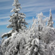 Winter trees in snow — Stockfoto