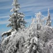 Stock Photo: Winter trees in snow
