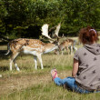 Girl looking on deers — Stock Photo
