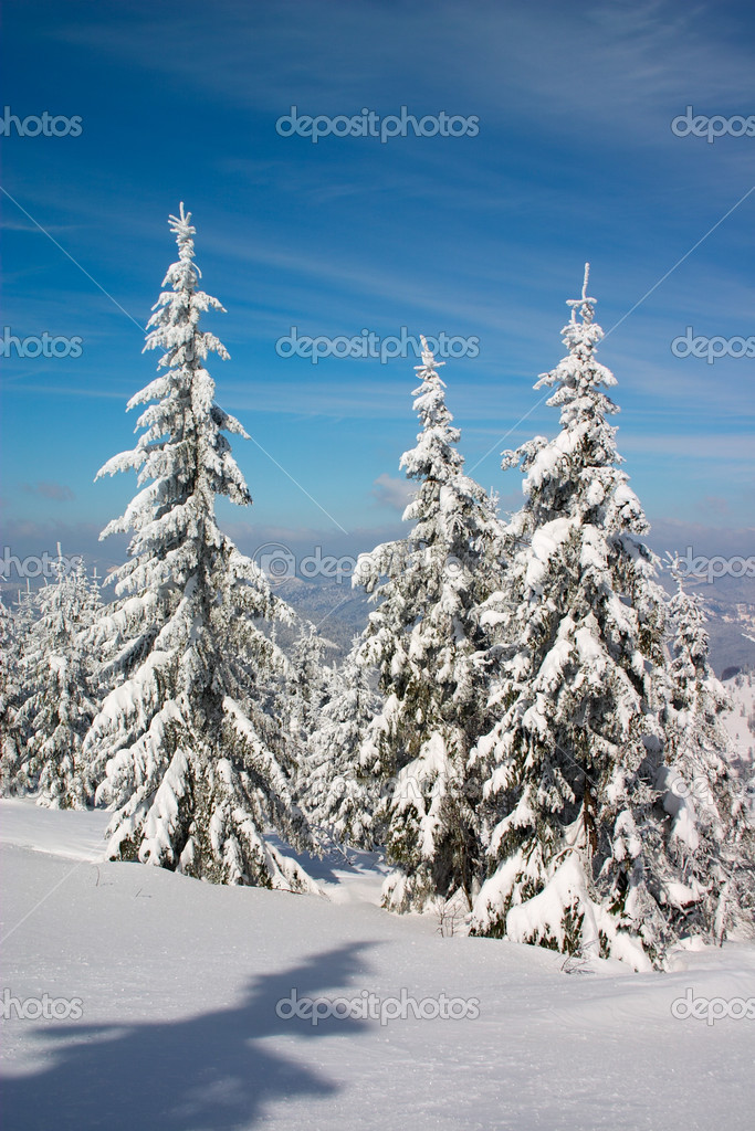 Snow covered fir trees under blue sky — Foto de Stock   #1726577