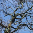 Tree branches on a background of sky — Stock Photo #2209148