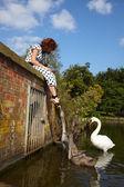Woman feeding mute swans in a lake — Stock Photo