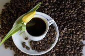 Coffee and a yellow tulip — Stock Photo