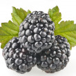 Blackberry fruit objects isolated — Stock Photo