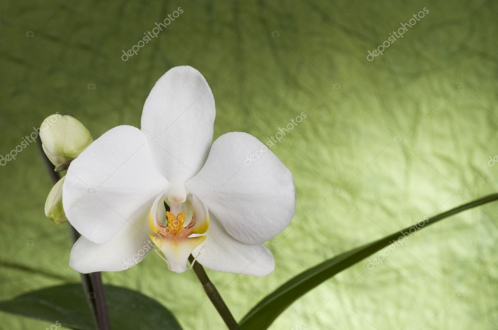 Beautiful white orchid over green textured background — Stock Photo #1738973