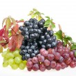 Stock Photo: Grape food over white