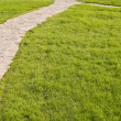 Green grassed area — Stock Photo