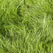Green grassed background — Stock Photo