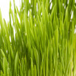Royalty-Free Stock Photo: Spring green grass background.